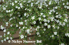 Nickys nursery hanging basket and trailing plant centre nickys nursery flower seeds grass seed wildflower seed mixtures mightylinksfo